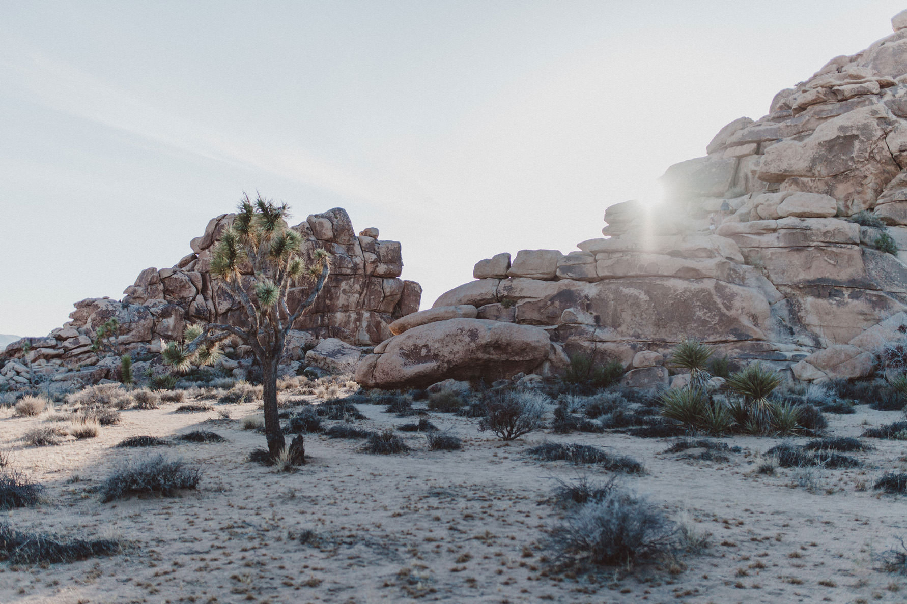 irena-ryan-joshuatree-engagement-photos-california-photographer001